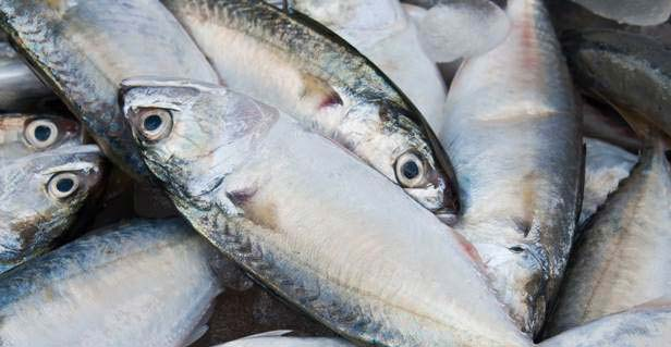 Indian seafood exports touch a new high!