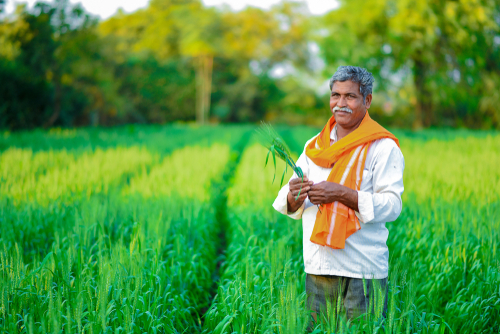 SUSTAINABLE AGRICULTURE - TURNING TO ORGANIC AND NATURAL FARMING